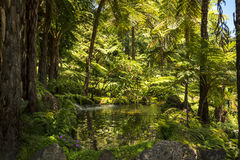Nadrzewny teren w Pięknym ogródzie przy Monte nad Funchal madera zdjęcie stock
