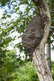 Nadrzewny termitu gniazdeczko obrazy stock