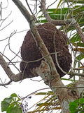 Nadrzewny termitu gniazdeczko fotografia stock