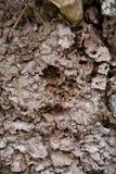Nadrzewny termitu gniazdeczko fotografia royalty free