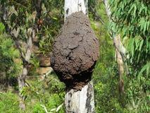 Nadrzewny termitu gniazdeczko na drzewnym bagażniku zdjęcie stock