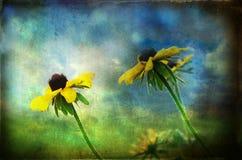 nadużywający daisys Zdjęcie Stock