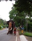 Nadungamuwa大象 免版税库存照片
