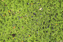 Nadwodne rośliny Obrazy Stock