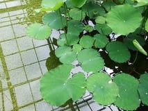 Nadwodne rośliny w ogródzie botanicznym fotografia royalty free