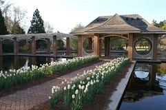 Nadwodny ogród zdjęcie stock