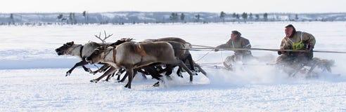NADYM, РОССИЯ - 18-ОЕ МАРТА 2006: Участвовать в гонке на оленях во время праздника  Стоковое Фото