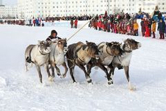 Indigenous people of Northern Siberia Nenets winter day at tradi. NADYM, RUSSIA - MARCH 04, 2018: Competitions on reindeer sledding during the traditional Nenets royalty free stock photography