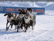 NADYM, RUSSIA - MARCH 17, 2006: Racing on deer during holiday of Stock Image