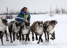 NADYM, RUSSIA - MARCH 16, 2008: Racing on deer during holiday of Stock Images