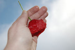 nadziei 2 czerwony Fotografia Royalty Free