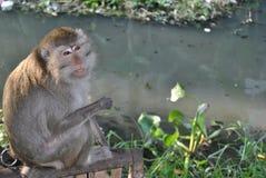 nadzieja małpa Fotografia Royalty Free