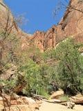 Nadzwyczajni monolity w Zion parku narodowym fotografia royalty free
