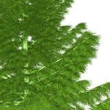 nadzy boże narodzenia przygotowywający drzewo Obraz Stock