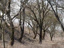Nadzy deciduous drzewa obrazy royalty free