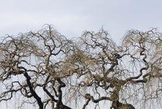 Nadzy drzewa fotografia stock