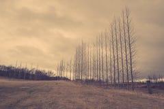 Nadzy drzewa na rzędzie Zdjęcia Stock