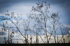 Nadzy drzewa przy zimą Zdjęcia Royalty Free