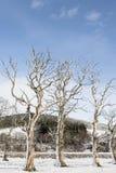 Nadzy drzewa w śniegu przy Strathdon w Szkocja Zdjęcie Stock