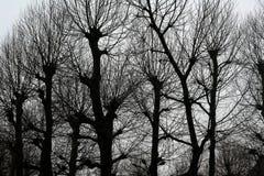 Nadzy drzewa w Portugalia Fotografia Stock
