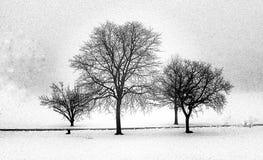 Nadzy zim drzewa Odizolowywający Na Białym Śnieżnym tle Fotografia Stock