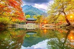 NAEJANGSAN,韩国- 11月1 :拍照片的游人 图库摄影