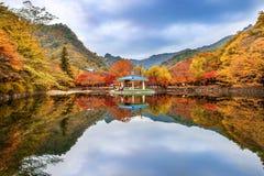 NAEJANGSAN,韩国- 11月1 :拍照片的游人 免版税库存照片