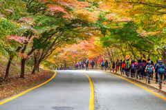 NAEJANGSAN, CORÉE - 1ER NOVEMBRE : Touristes prenant des photos Photo stock