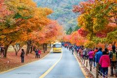 NAEJANGSAN, CORÉE - 1ER NOVEMBRE : Touristes prenant des photos Photographie stock libre de droits