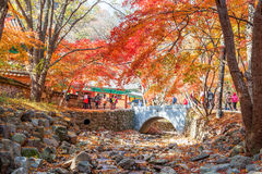 NAEJANGSAN,KOREA - NOVEMBER 30: Tourists taking photos. Royalty Free Stock Images