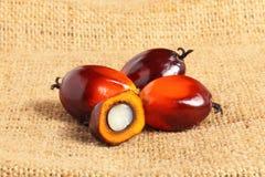 Nafcianej palmy owoc Zdjęcie Stock