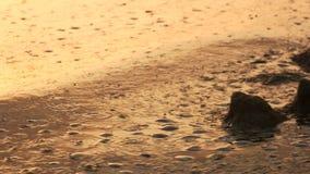 Nafciany zanieczyszczenie morze zbiory