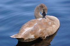 A nagé dans le lac Photographie stock libre de droits