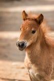 Nag horse Royalty Free Stock Photo