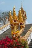 Naga Stock Foto's