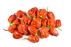 Naga Chillies Royalty Free Stock Image