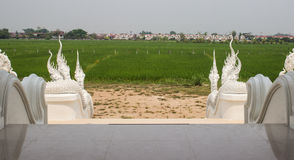 Naga descent of asian temple. Naga descent of asian church with paddy field view Royalty Free Stock Images