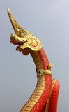 Naga Stock Photography