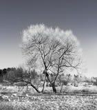 naga drzewna zima Obraz Stock