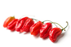 Naga morich Stock Photography