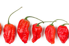 Naga morich Royalty Free Stock Photo