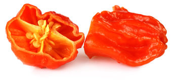 Naga Morich of Bangladesh Royalty Free Stock Image