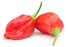Naga Morich of Bangladesh Stock Photo