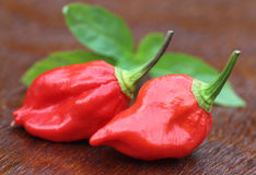 Naga Morich of Bangladesh Stock Photography