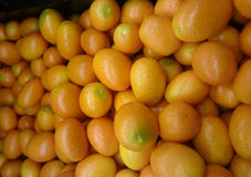 Nagami kumquat Stock Photography