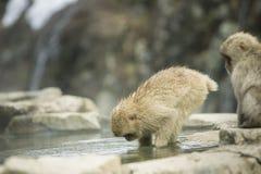 Nagano-Schnee-Affe Lizenzfreie Stockbilder