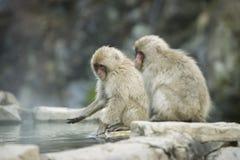 Nagano-Schnee-Affe Stockbilder