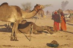 Nagaur Livestock Fair, India Royalty Free Stock Photos