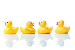 Nageant contre le courant, canards en caoutchouc sur le blanc Photo libre de droits