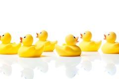 Nageant contre le courant, canards en caoutchouc sur le blanc Image stock